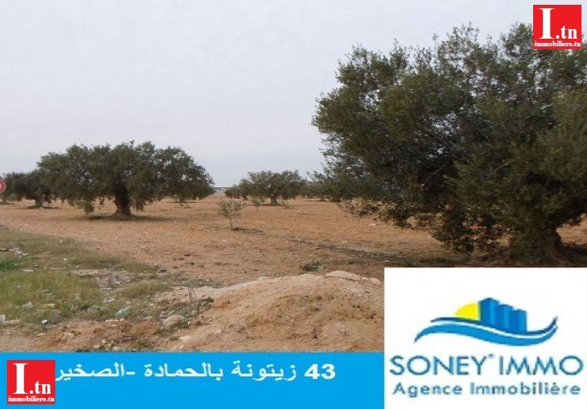 43 oliviers titre foncier à el hmada