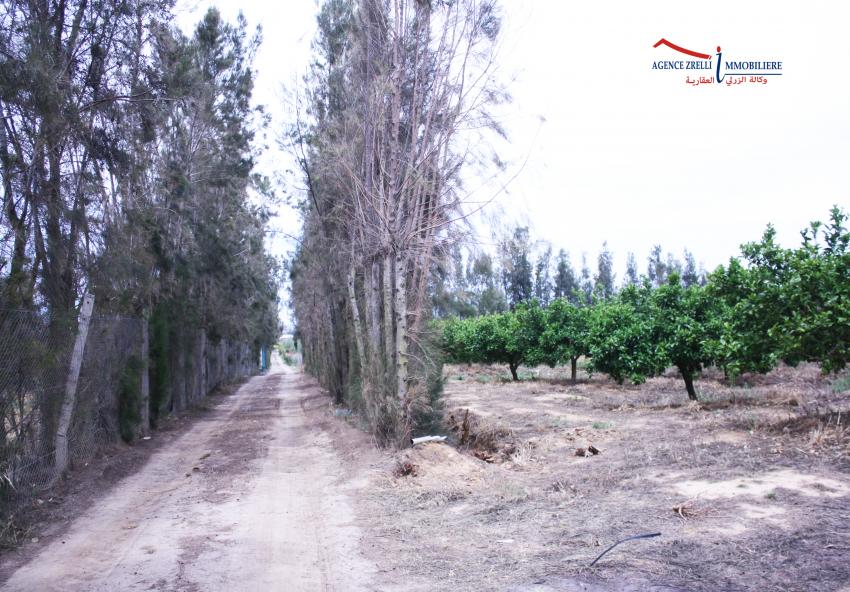 Une ferme à Takilssa de 26 hectares entièrement clôturés et sécurisés