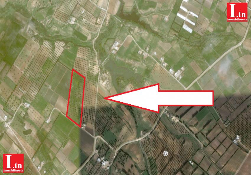 Terrain Agricole a Fernine