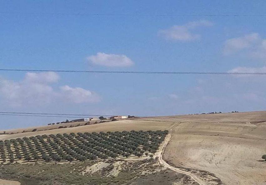 terrain agricol
