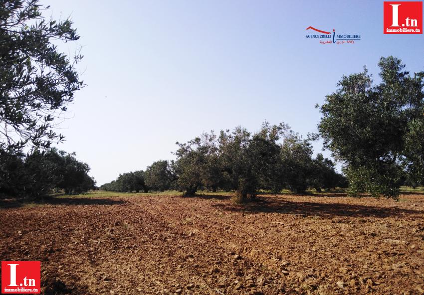 un terrain Agricole fertile de superficie 4,3024 hectares à Tazaghran-Menzel Tmime