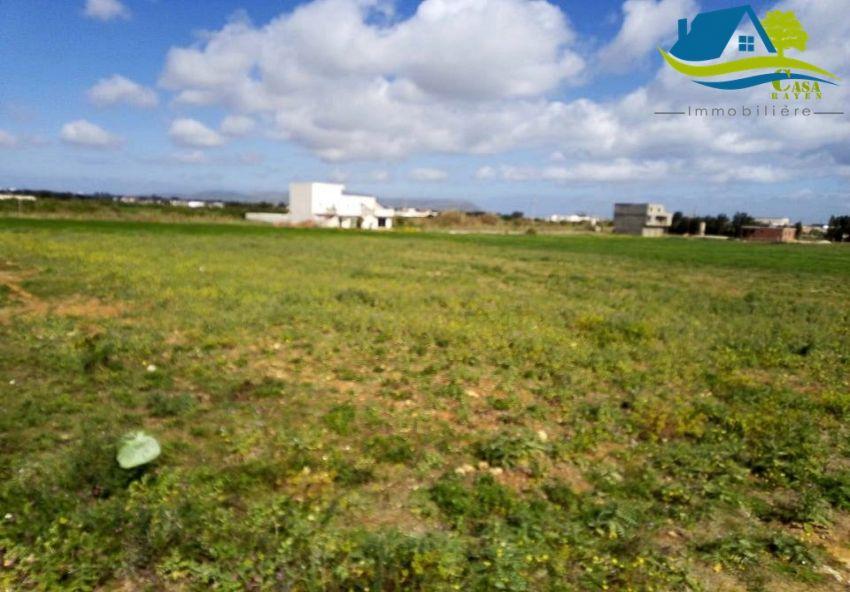 أرض في دار علوش قليبية فيها 150 م ب 19 مليون