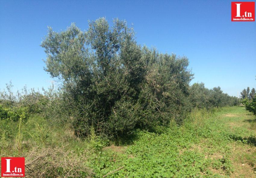 Terrain agricole Nianou 3M392