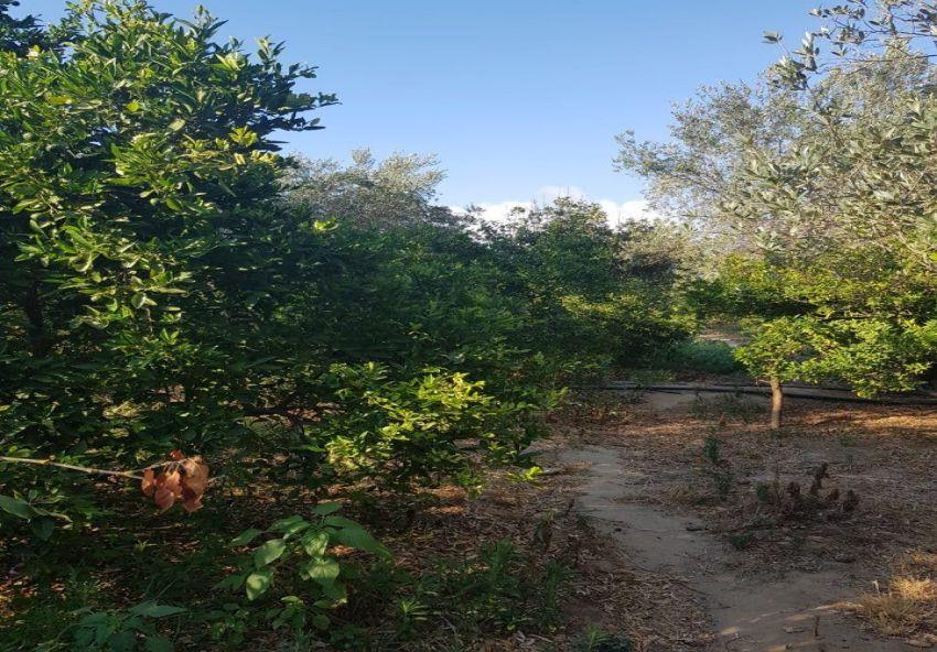 Terrain agricole El Marja 3M359